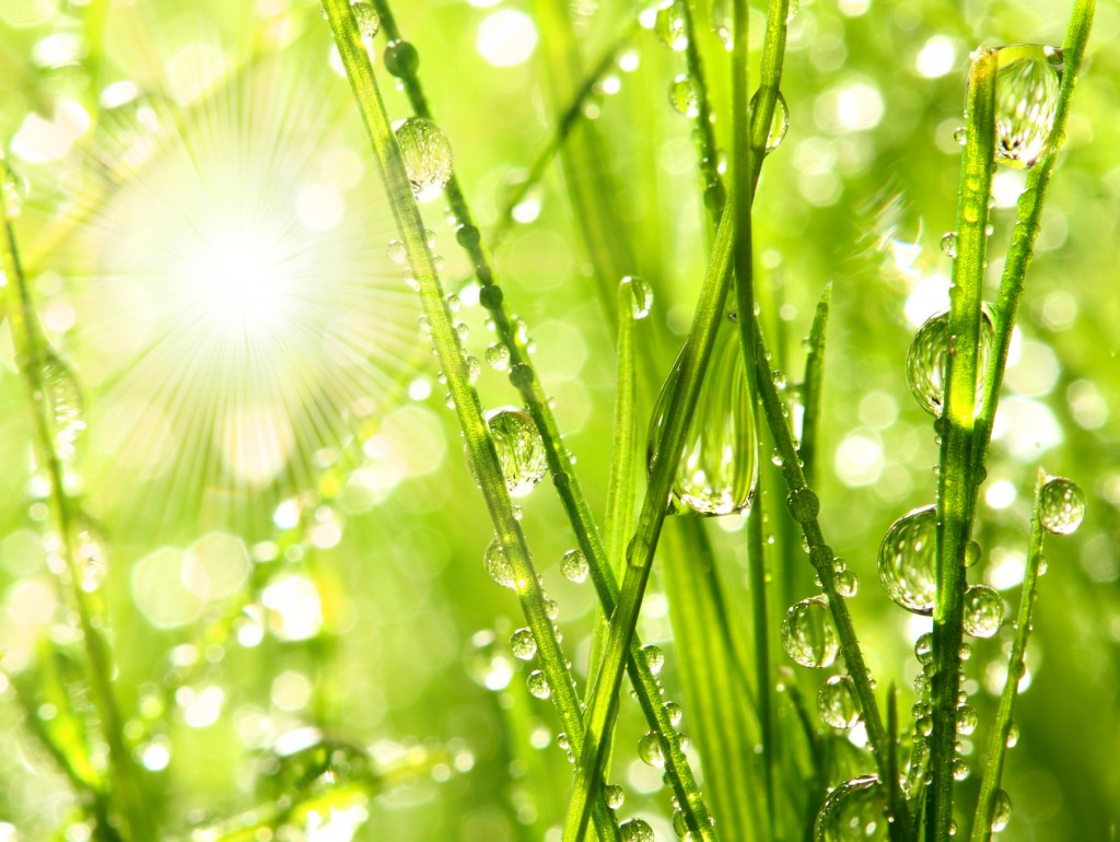 grass-sunshine-drops-grass-splendor-bokeh-green-nature-rain-desktop-background-images