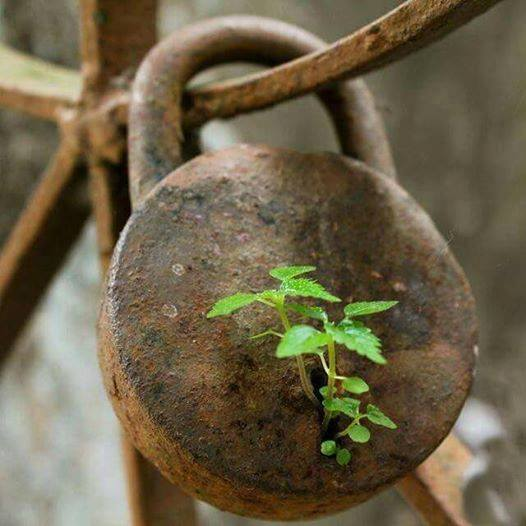 potato principle lock
